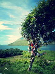 West of Ireland, tree with socks